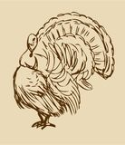 Walking Thanksgiving Turkey Royalty Free Stock Images