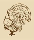 Walking Thanksgiving Turkey Royalty Free Stock Images