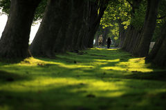 Free Walking Through The Forest Stock Photography - 10327122