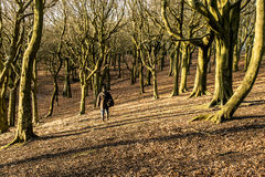 Walking thru the woods at Tandle Hill Royalty Free Stock Photo
