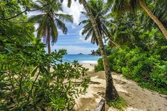 To the beach through a clearing in the jungle on the seychelles royalty free stock photography