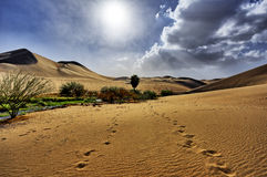 Walking to the Oasis. Walking to an oasis in the desert Stock Images