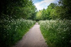 A beautiful road full of spring flowers royalty free stock photo