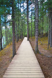 Walking track inside forest Royalty Free Stock Images