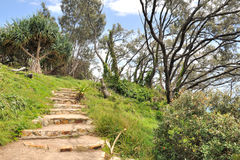 Walking track on the North Stradbroke Island Stock Image
