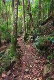 Walking track through rainforest Stock Photo