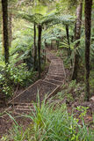 Walking track in rainforest. In New Zealand Stock Photography