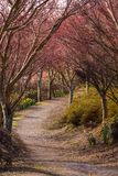 A walking track at the start of spring clean royalty free stock image