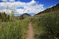 Walking trail. Through grass with mountains scenery ahead stock images