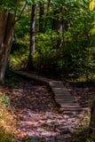 Walking trail. Biking, Hiking, Walking trail through the woods royalty free stock photos