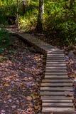 Walking trail. Biking, Hiking, Walking trail through the woods royalty free stock images