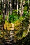 Walking trail. Biking, Hiking, Walking trail through the woods stock photo