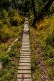 Walking trail. Biking, Hiking, Walking trail through the woods stock photos