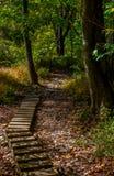 Walking trail. Biking, Hiking, Walking trail through the woods royalty free stock photo