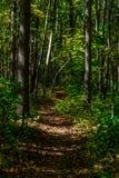Walking trail. Biking, Hiking, Walking trail through the woods royalty free stock image