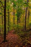 Walking trail. Biking, Hiking, Walking trail through the woods stock image