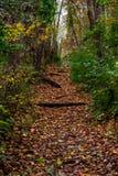 Walking trail. Biking, Hiking, Walking trail through the woods stock images