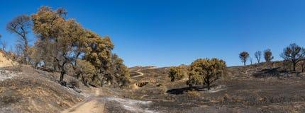Walking Trail in Burn Zone Stock Photos