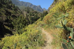 Walking trail in the Caldera de Taburiente, Canary Stock Images