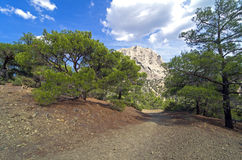 Walking trail in the Crimean mountains. Royalty Free Stock Photo