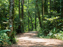 Walking trail in forest at Koh Kood Royalty Free Stock Image