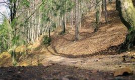 Walking trail in forest. Malino Brdo, Slovakia Stock Photos