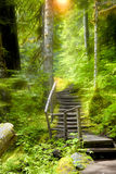 Walking trail in the forest Stock Photography