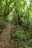 Walking trail in forest. Walking trail in tropical forest Royalty Free Stock Photography