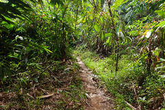 Walking trail in the jungle Royalty Free Stock Photography