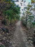 walking trail in the jungle stock photos