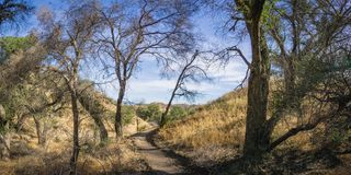 Panorama of Trail through California Forest Royalty Free Stock Images