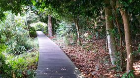 MacRitchie Reservoir. Walking trail in MacRitchie Reservoir royalty free stock images