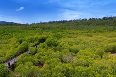 Walking trail in mangrove forest Stock Images