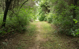 A Walking Trail the Woods Stock Image