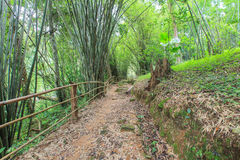 Walking Trail on a Mountain in Thailand. Walking Trail at a waterfall on a mountain in Thailand Royalty Free Stock Photography