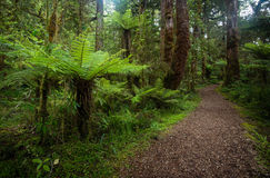 Walking trail in New Zealand Stock Photos