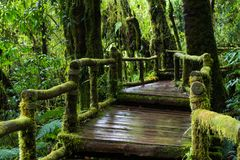 Walking trail Rain forest background with green mosses and fern Royalty Free Stock Photo