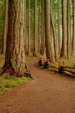 Walking trail and rustic fence in a forest of majestic old growth mature Douglas fir trees on Vancouver Island. Taken at Rathtrevor Beach Provincial Park on stock images