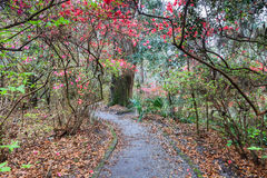 Walking Trail Through Southern Garden Stock Image
