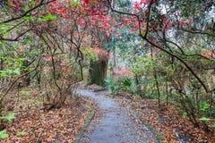 Walking Trail Through Southern Garden SC. Pedestrian walking trail through southern garden of azaleas in spring in Charleston, South Carolina stock image