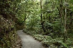 Walking trail Stock Photography