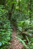 Walking trail in forest. Walking trail in tropical forest Royalty Free Stock Photos