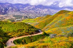 Walking trail in Walker Canyon during the superbloom, California poppies covering the mountain valleys and ridges, Lake Elsinore,. South California royalty free stock image