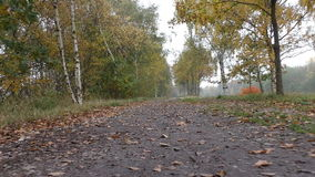 Walking the trail in woods in autumn low angle stock video footage