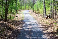 Walking Trail in the Woods Stock Image