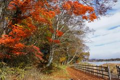 Walking trails at  Lake Yamanaka in the autumn season of Japan stock photos