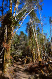 Walking the Travers Sabine Circuit, Nelson Lakes National Park Stock Image