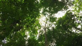 Walking in the Tropical Forest. Personal perspective head up point of view. HD slowmotion. Thailand. stock footage