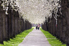 Walking Under Blossom Stock Photography