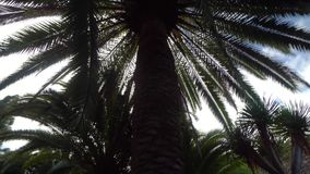 View under the trees in the park. Walking under the Plam trees in the park stock video